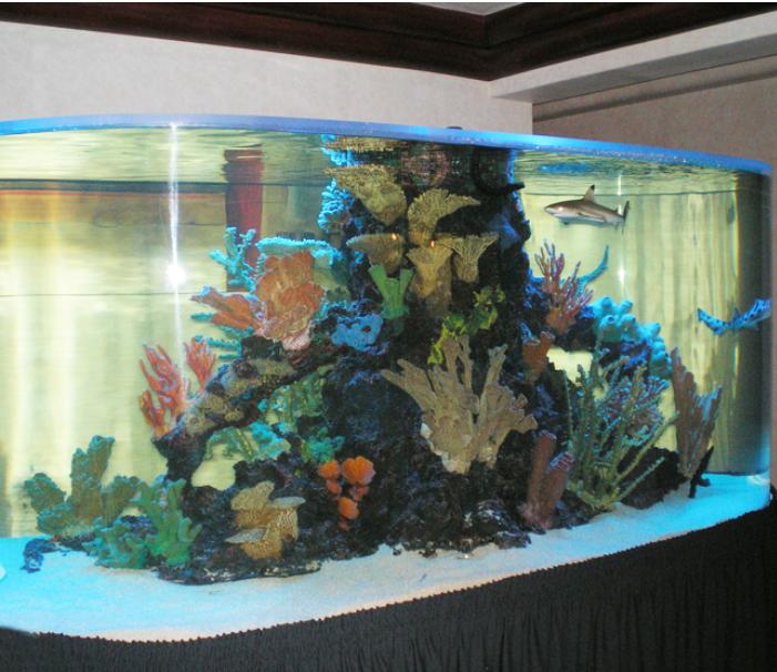 acvarii comanda corali pesti marini